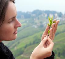 Herbata Darjeeling - poznaj jej właściwości!